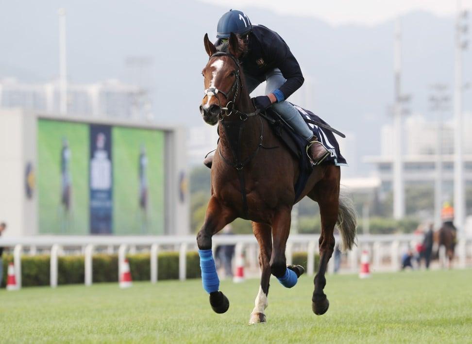 Zaaki gallops at Sha Tin on Friday.