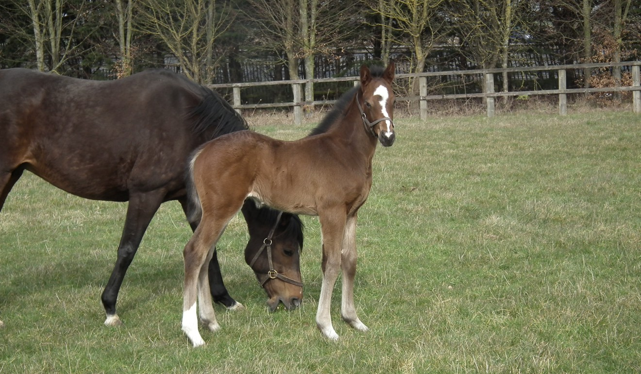 Hong Kong Mile runner Zaaki as a foal. Photo: Lanwades Stud