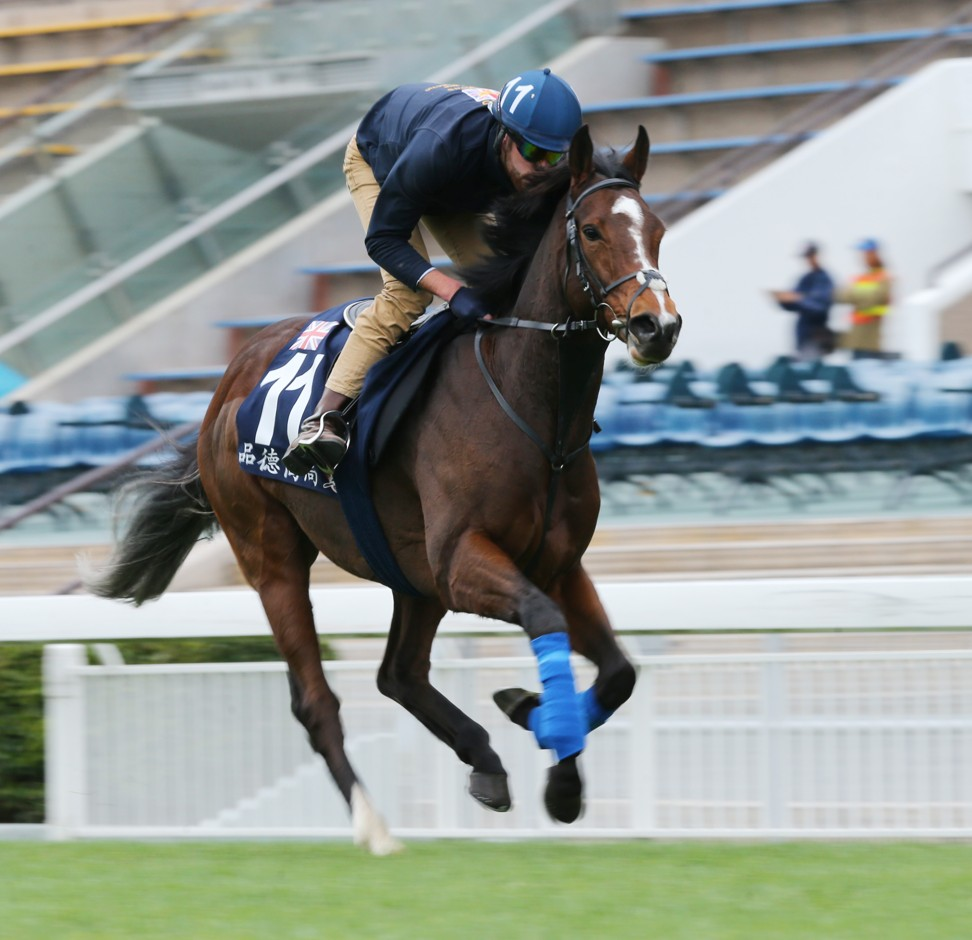 Zaaki gallops at Sha Tin this week.
