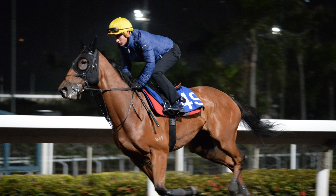 Xponential gallops on the all-weather surface at Sha Tin on Thursday morning.