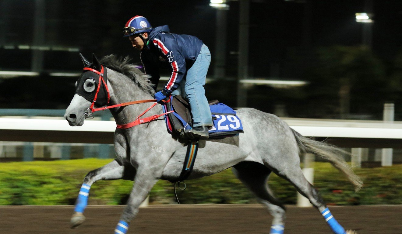 Decrypt gallops on the Sha Tin all-weather track on Thursday morning.