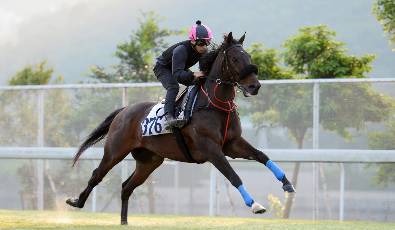 The Jimmy Ting-trained Flying Godspell trials at Sha Tin.