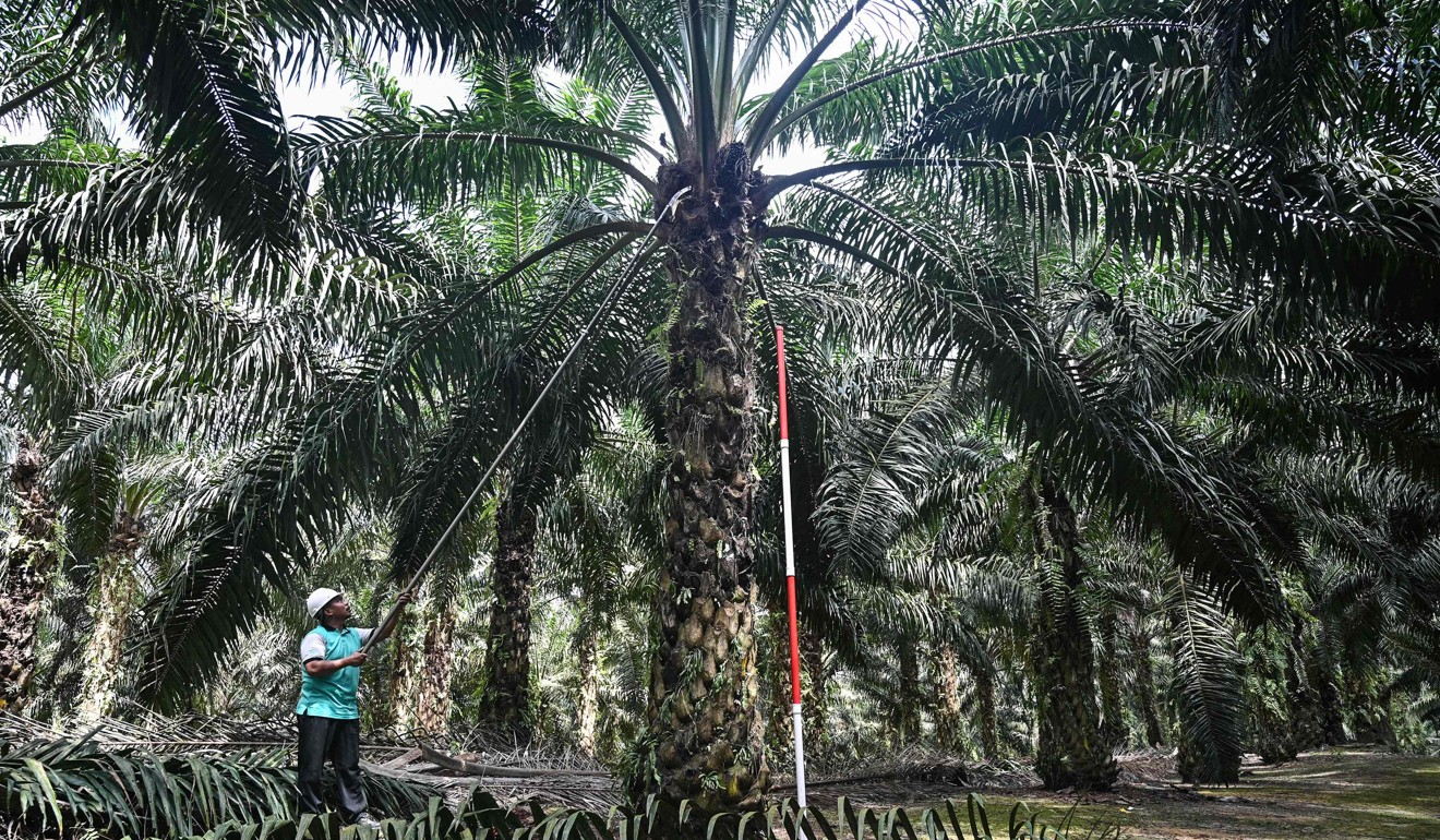 The US$12 billion reason Mahathir's Malaysia wants a return to agriculture
