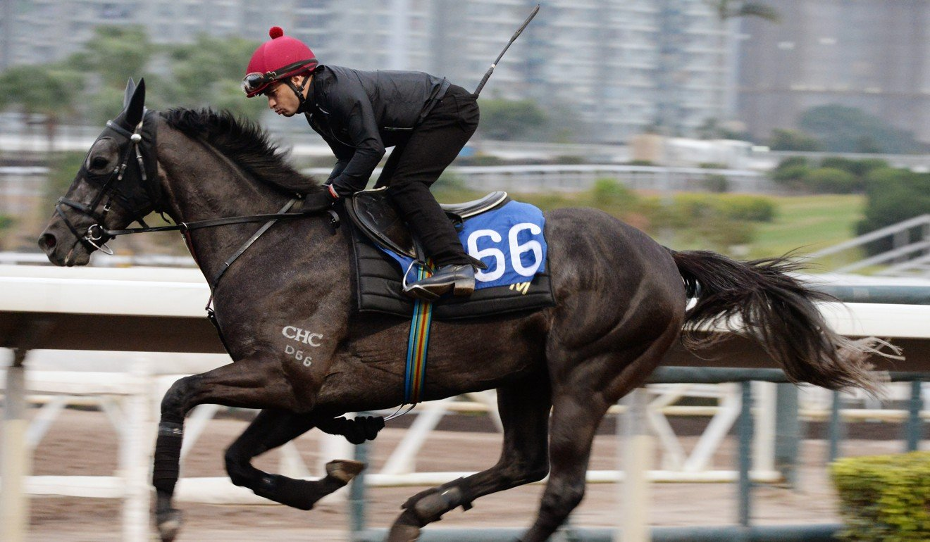 Silvestre de Sousa rides Enjoying in work at Sha Tin.