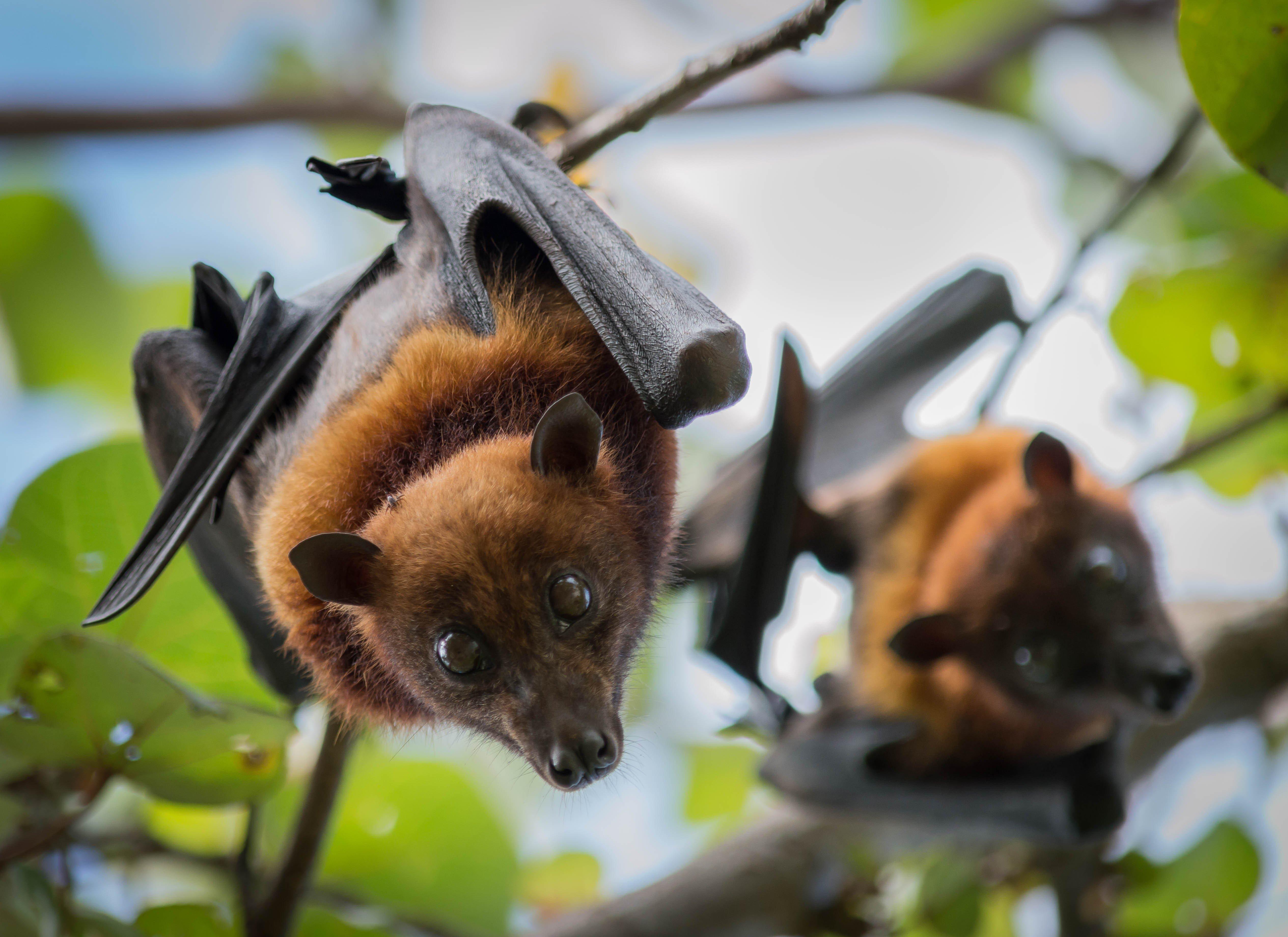 Coronavirus Weaker Than Sars But May Share Link To Bats