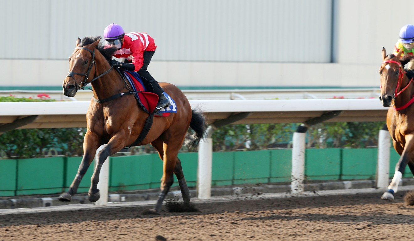 Wayfoong Star trials at Sha Tin on the all-weather surface.