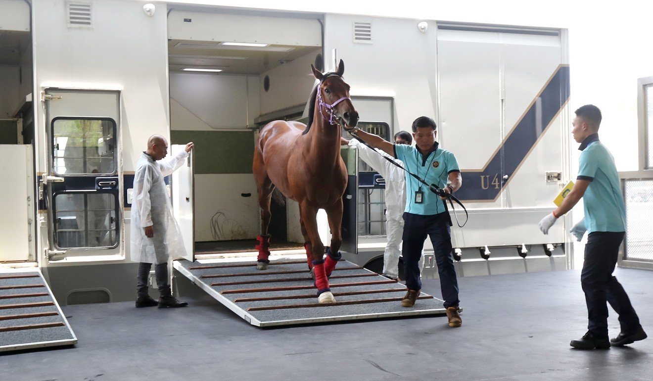 Horses at The Hong Kong Jockey Club Conghua Racecourse. Photo: HKJC