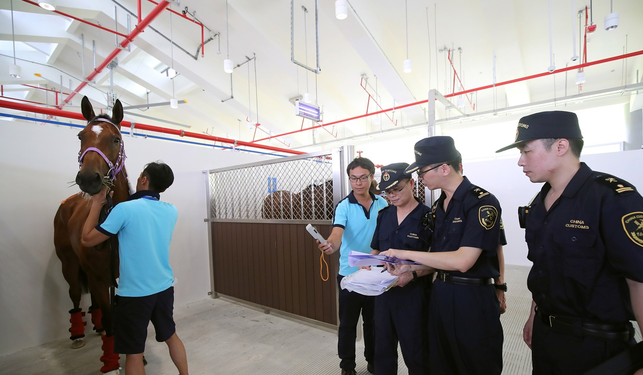 Horse being inspected by quarantine officials at Conghua. Photo: Kenneth Chan