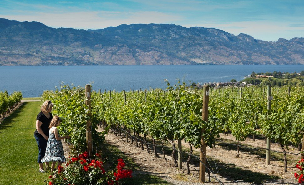 France, Italy, California … and Canada? Why the Canucks want you to drink their wine and visit their vineyards