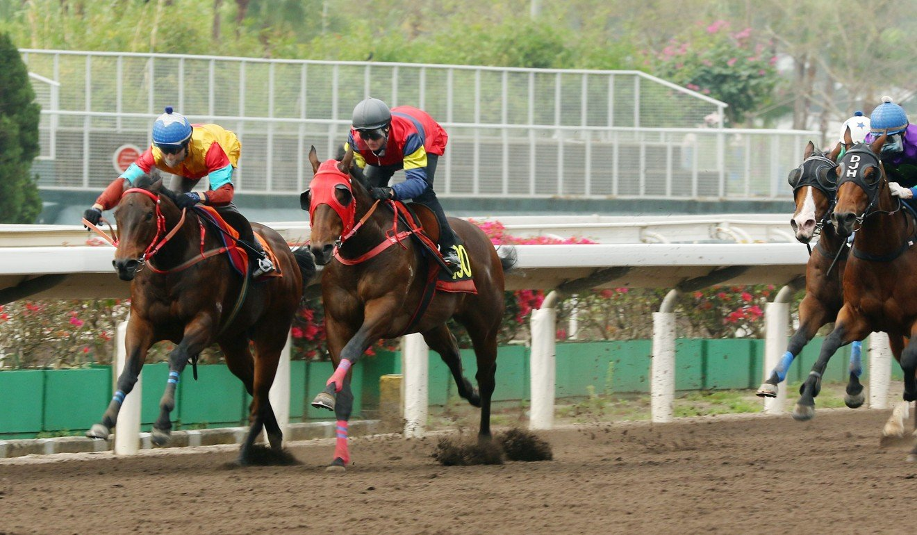 Big Time Baby (left) trials at Sha Tin on Friday morning.