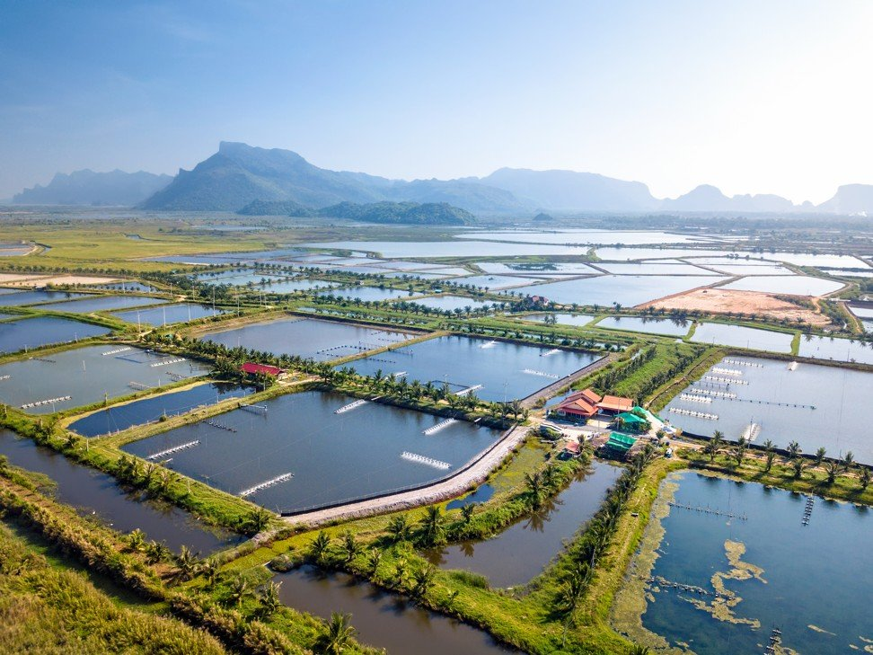 Shrimp farms adjoin the Khao Sam Roi Yot National Park, Thailand. The business is threatening nearby wetlands. Photo: Shutterstock