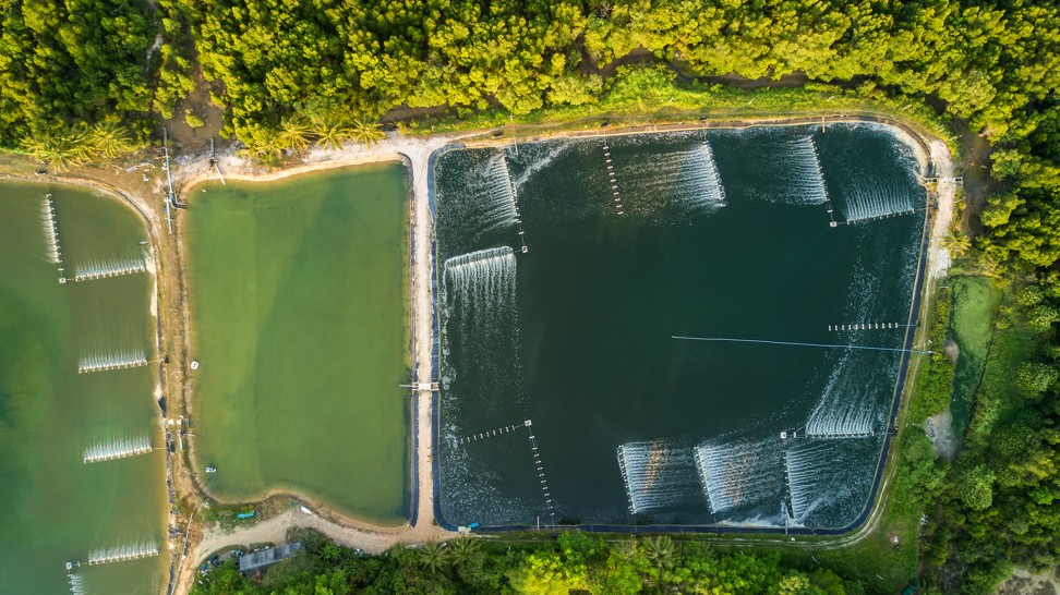 Shrimp farms in the Phang Nga bay area in Thailand. The shrimp industry is putting a huge strain on the environment. Photo: Shutterstock