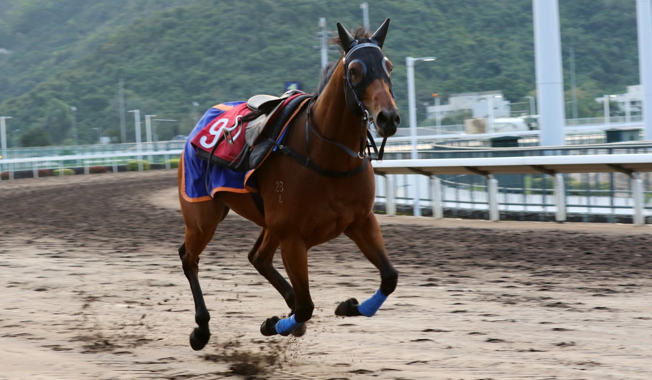 Amazing Star gallops around the track after Zac Purton fell off.