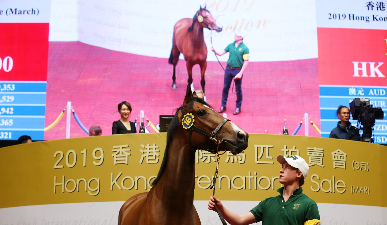 A horse goes under the hammer at the Hong Kong International Sale. Photo: Kenneth Chan