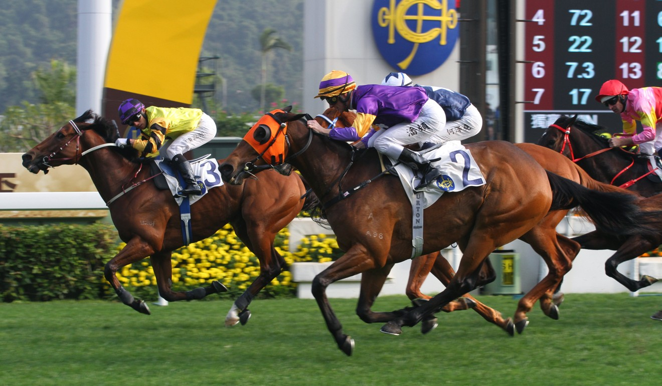 Mongolian King (purple silks) finishes second at Sha Tin in January.