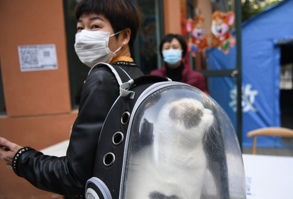 A woman takes her cat for a walk in Yiling, Hubei province. Photo: Xinhua