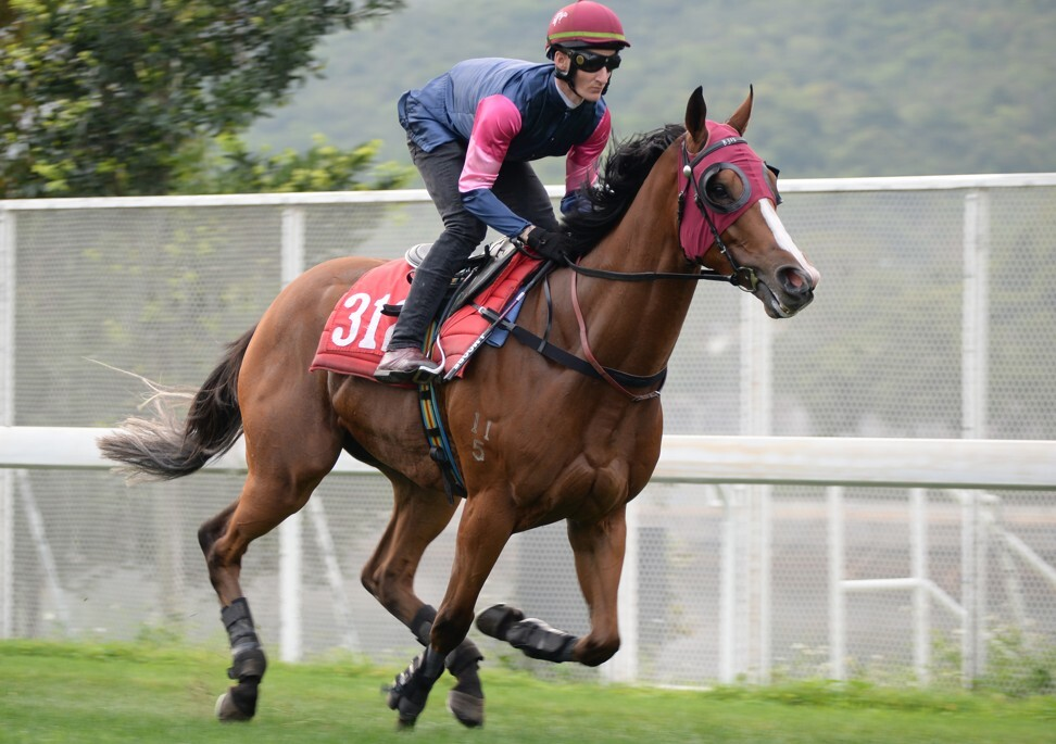 Thanks Forever gallops at Sha Tin this week.