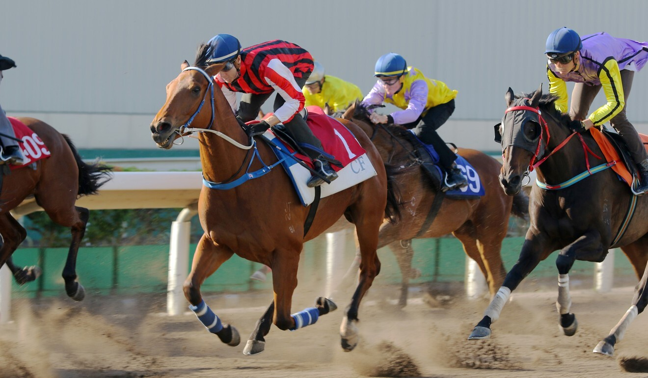 Explosive Witness trials well on the all-weather track.