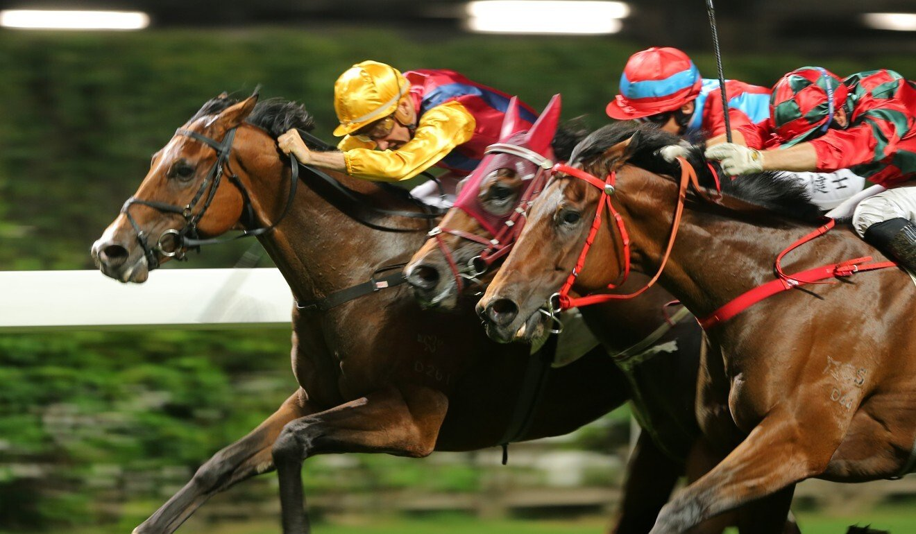 Blake Shinn drives Daily Delight to victory.
