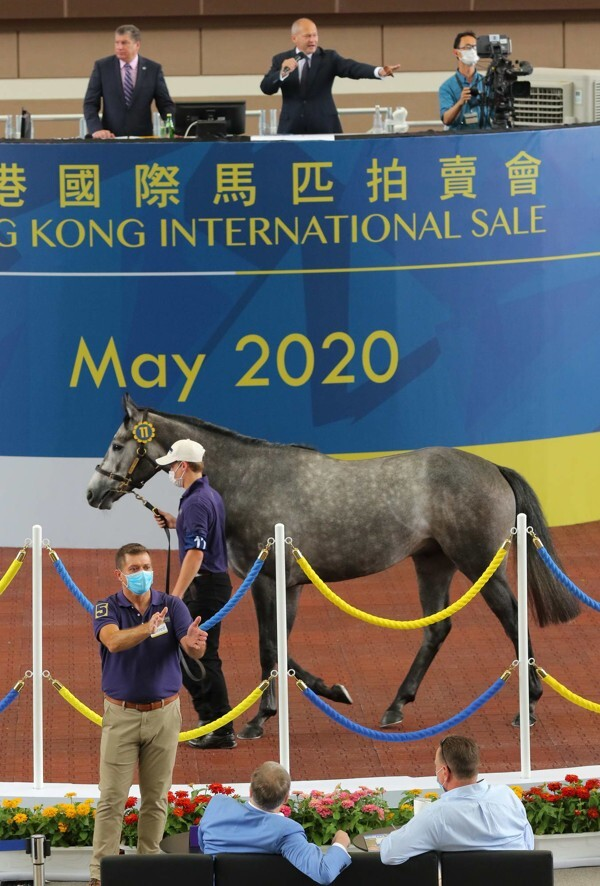 The son of Kodiac goes through the sale ring.
