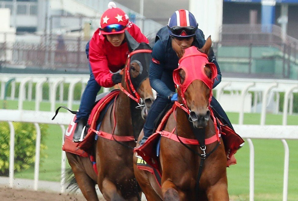 Alfred Chan (front) and Jerry Chau works horses at Sha Tin.