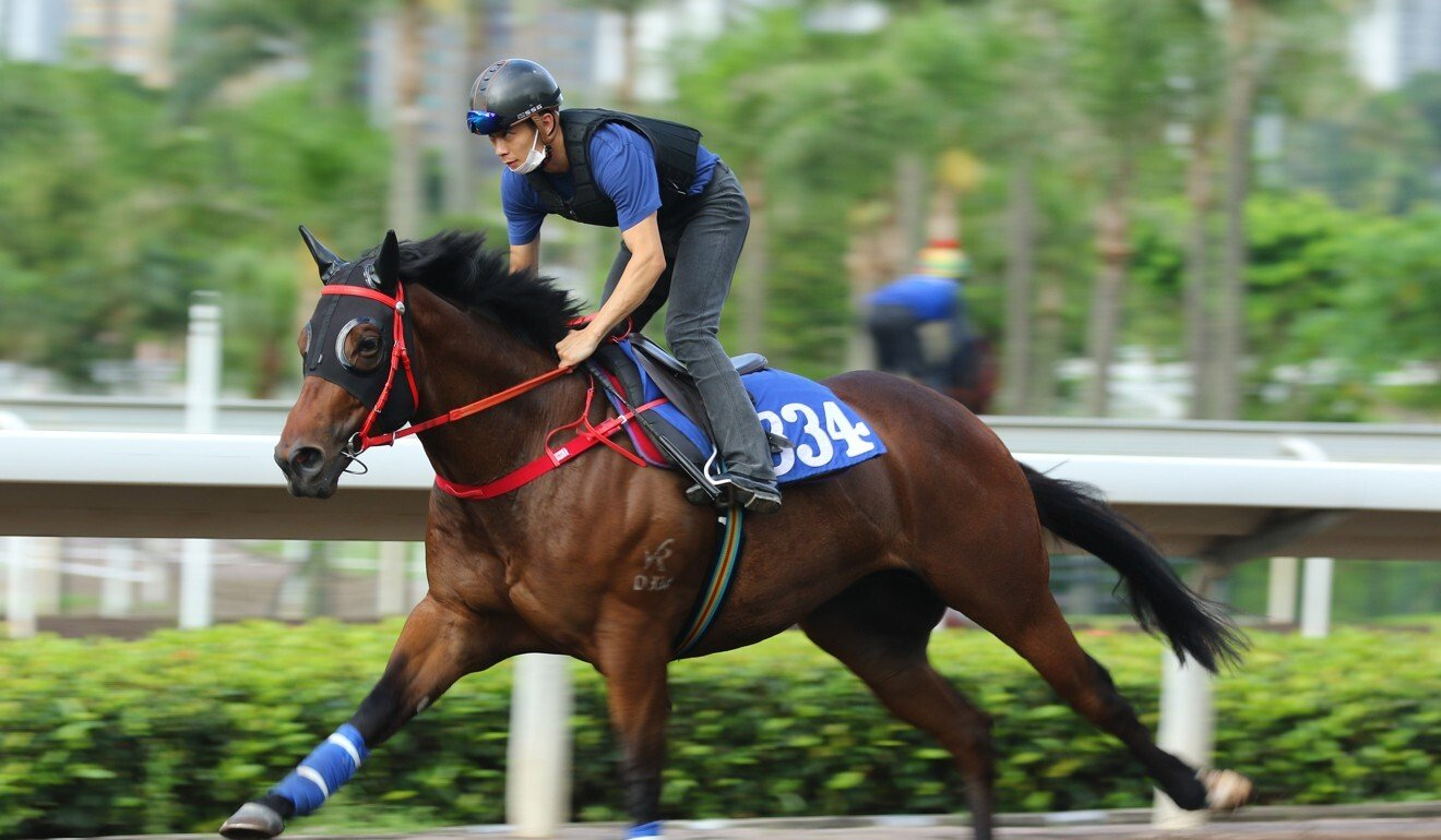 Rewarding Together works on the Sha Tin all-weather track.