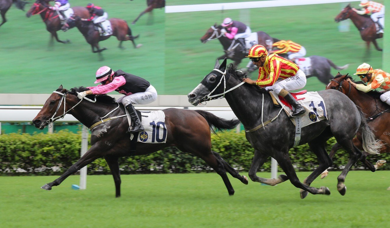 Circuit Number One runs second at Sha Tin earlier this month.