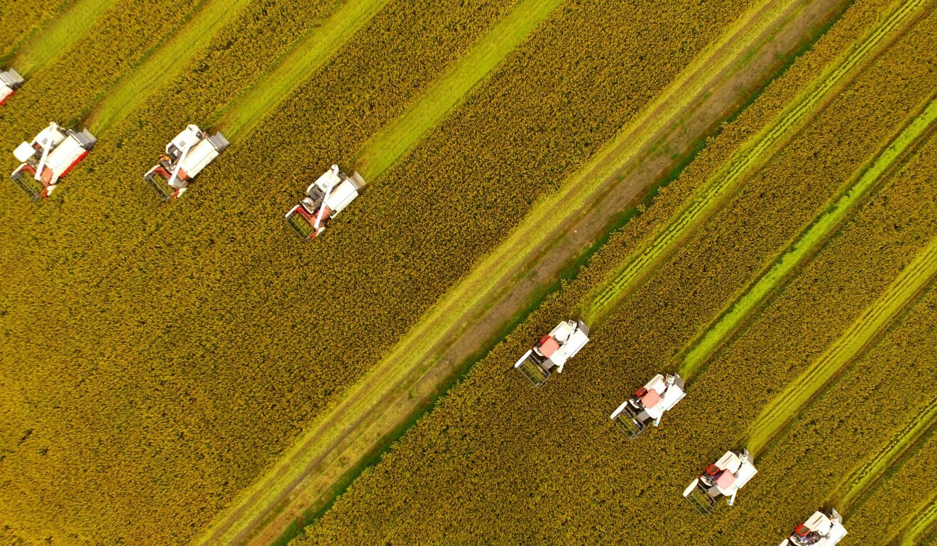 Chinese farmers harvest rice crops using combines in Xinghua, Jiangsu province. Photo: AFP