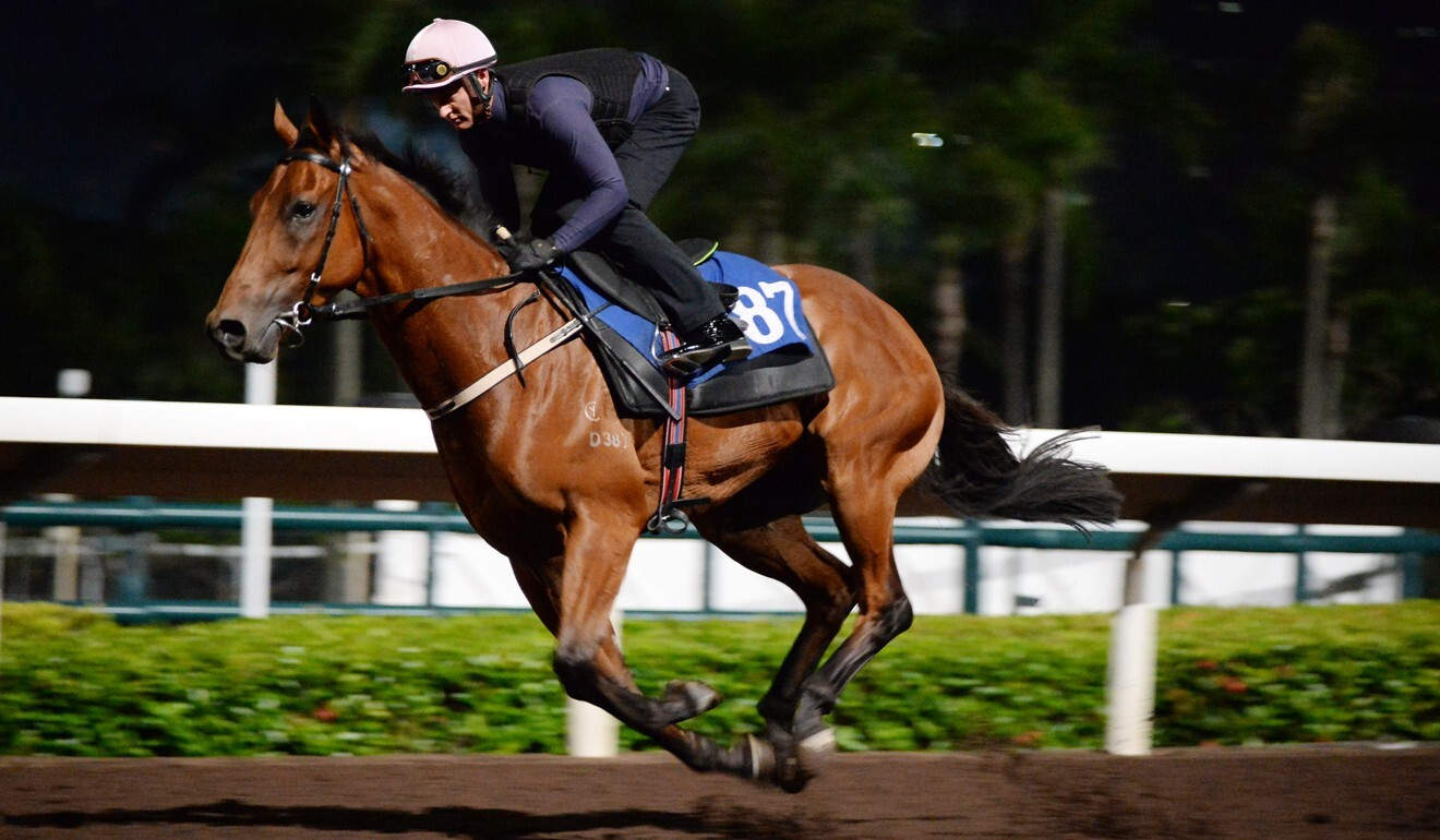 Zac Purton works Metro Warrior at Sha Tin on Tuesday morning.