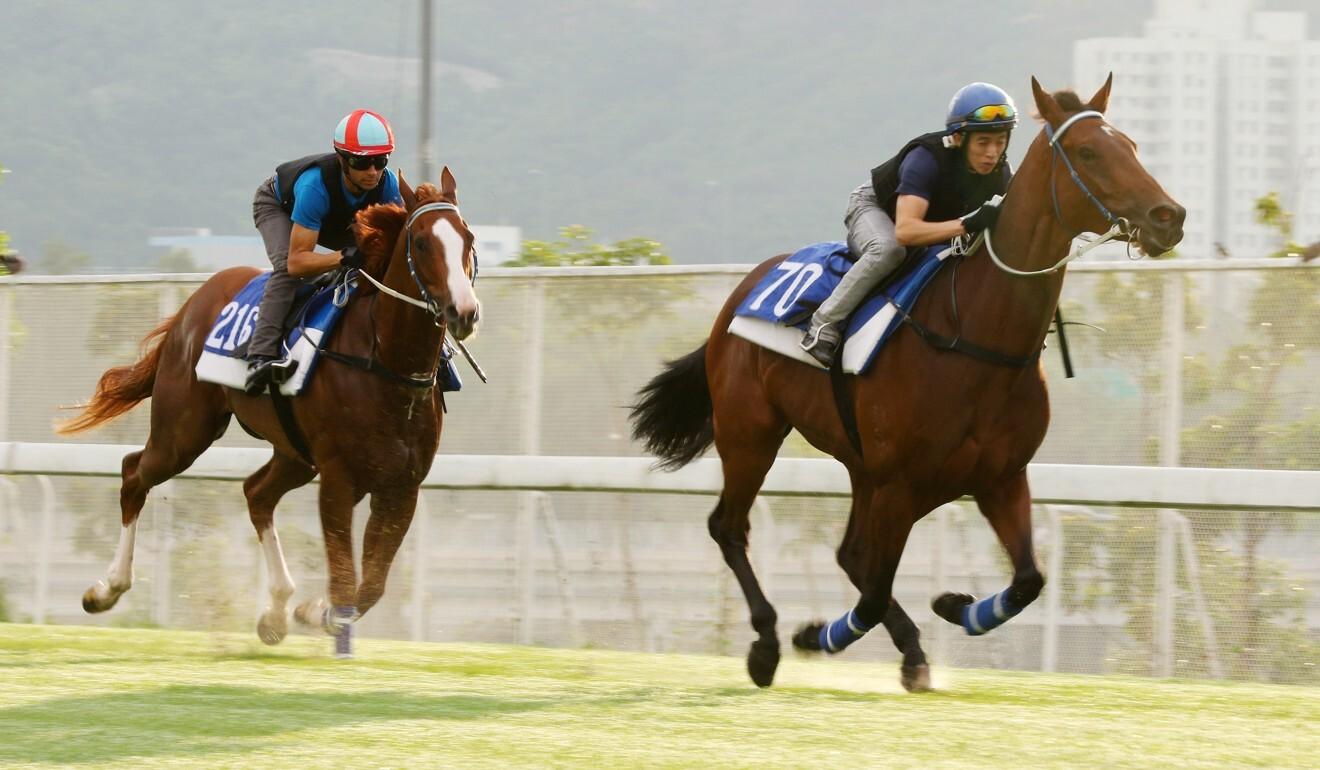Sky Field (left) gallops at Sha Tin.