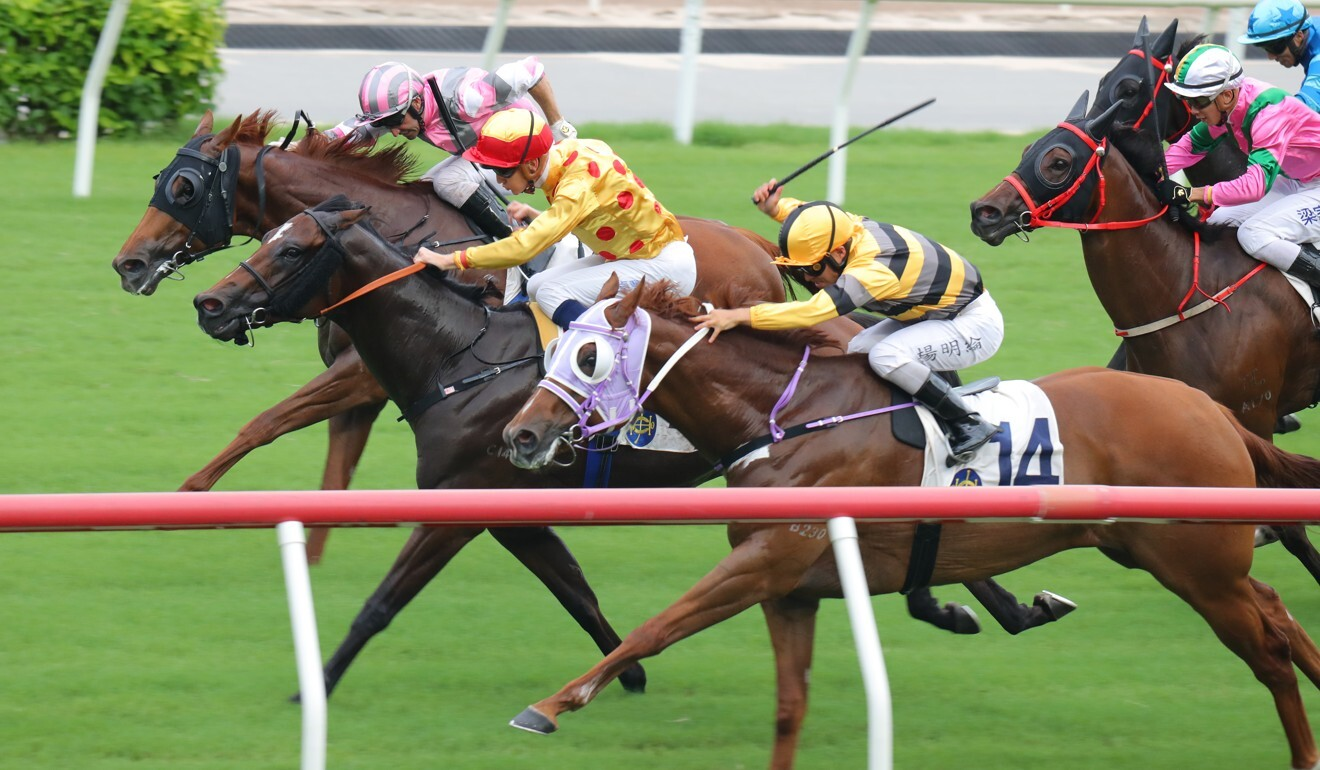 Gold Chest (middle) bursts through the gap to win earlier this season.