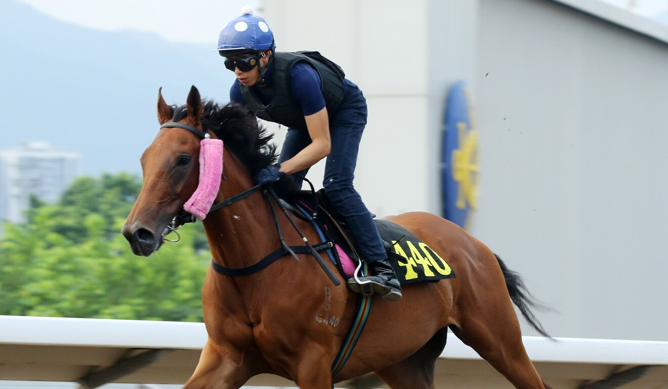 Vincent Ho works Seaweed Fortune at Sha Tin.