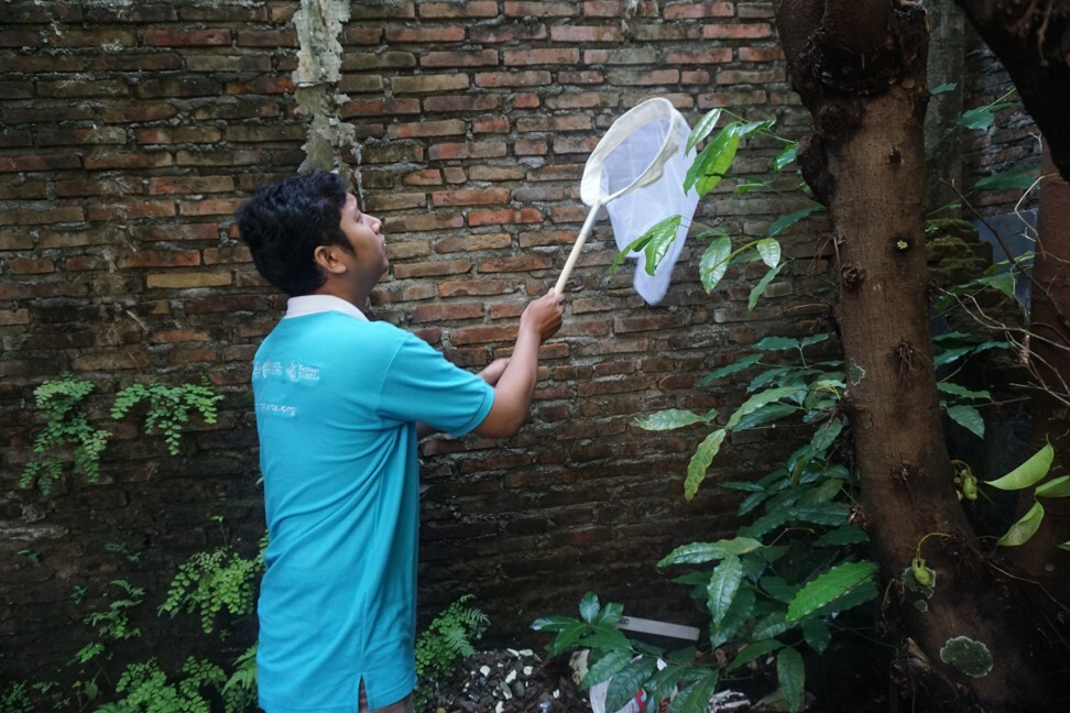 A programme member gathers mosquito samples from the community to test for Wolbachia levels.