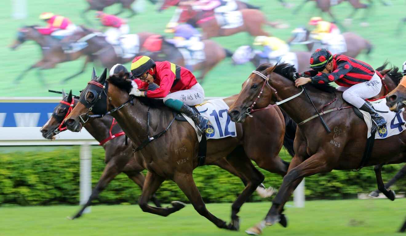 The Francis Lui-trained Water Diviner wins at Sha Tin in June.