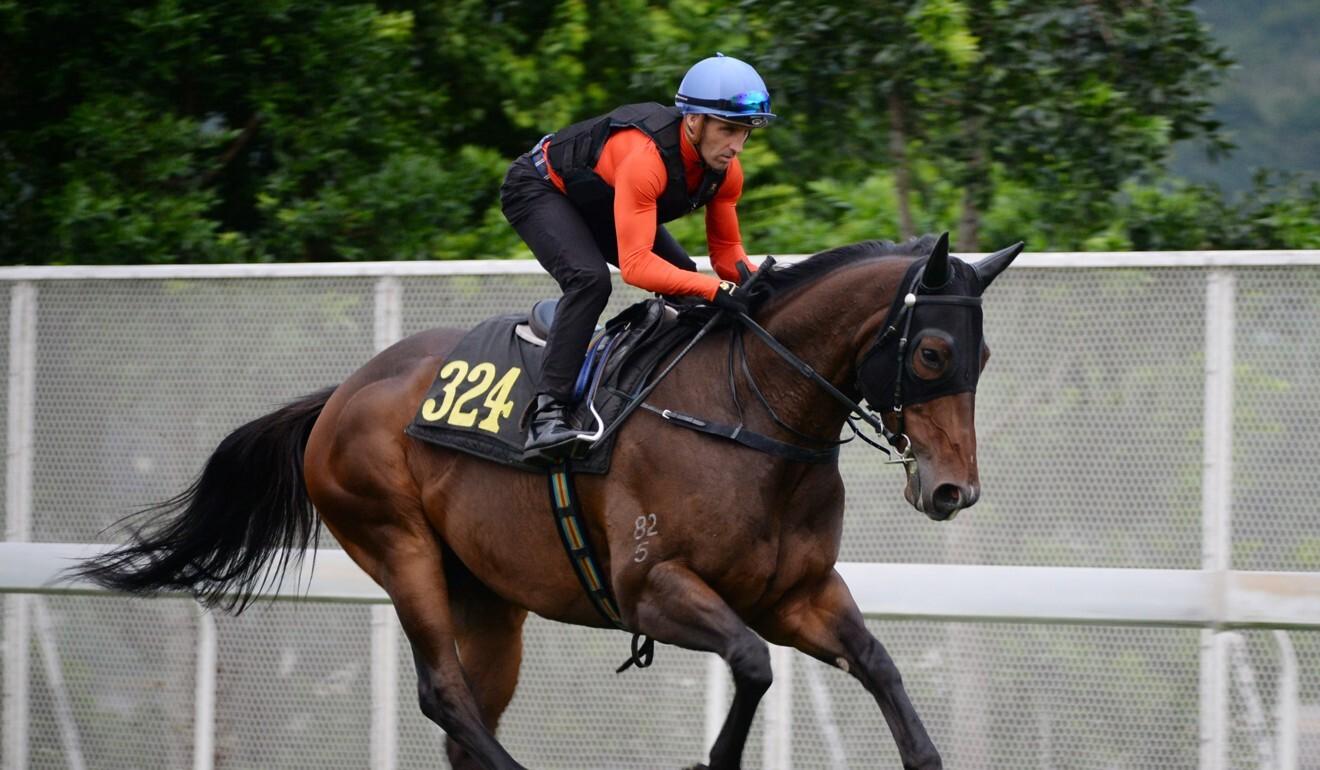Neil Callan rides Winning Feeling in work at Sha Tin on Monday morning.