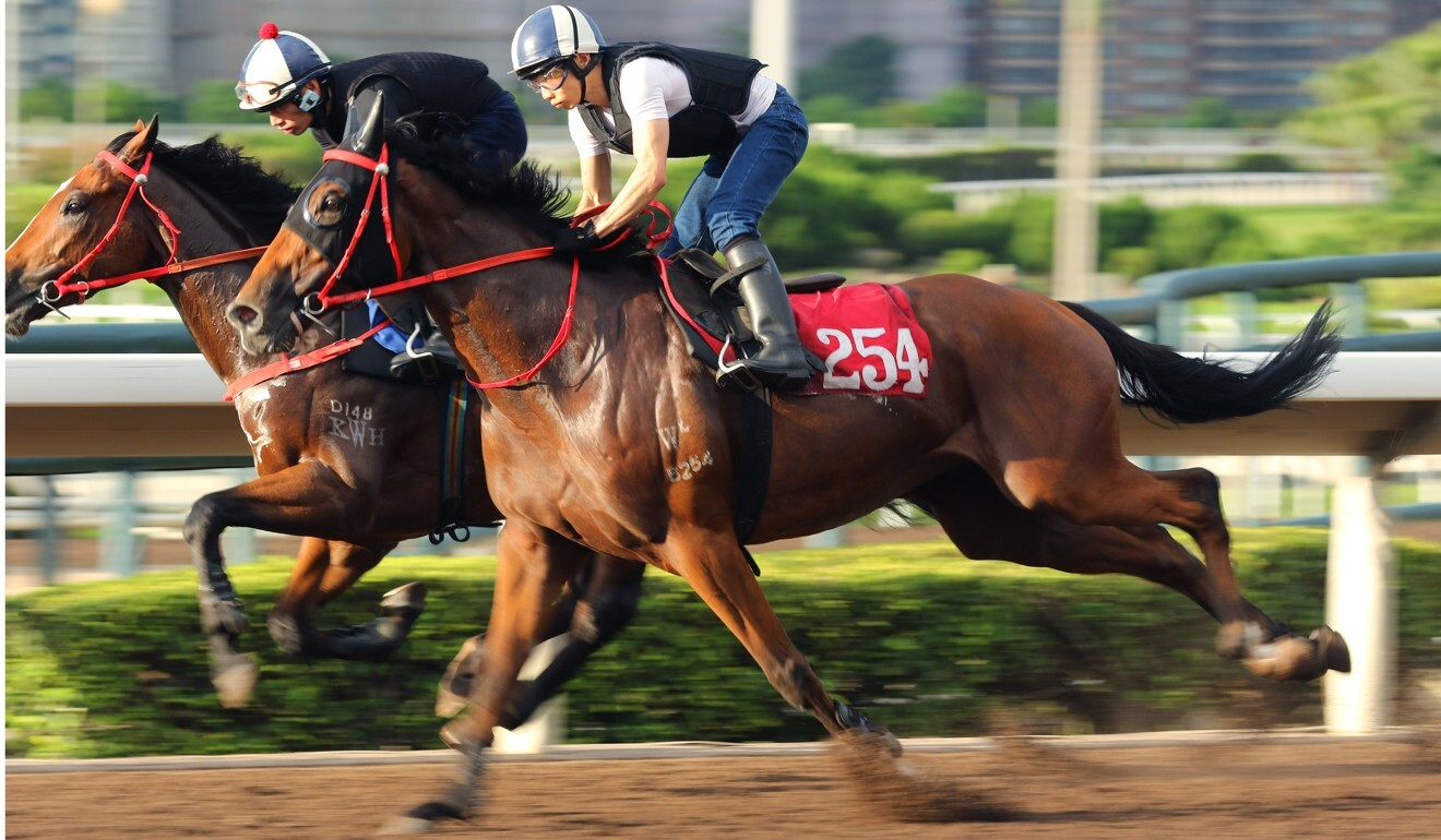 Precious Sweetie (outside) works at Sha Tin.