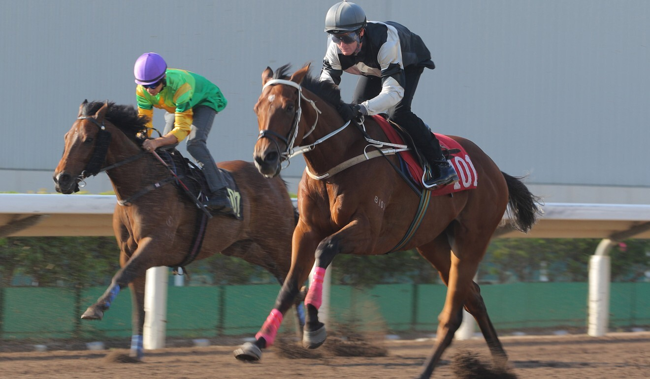 Exultant trials under Zac Purton on the Sha Tin all-weather track earlier this month.