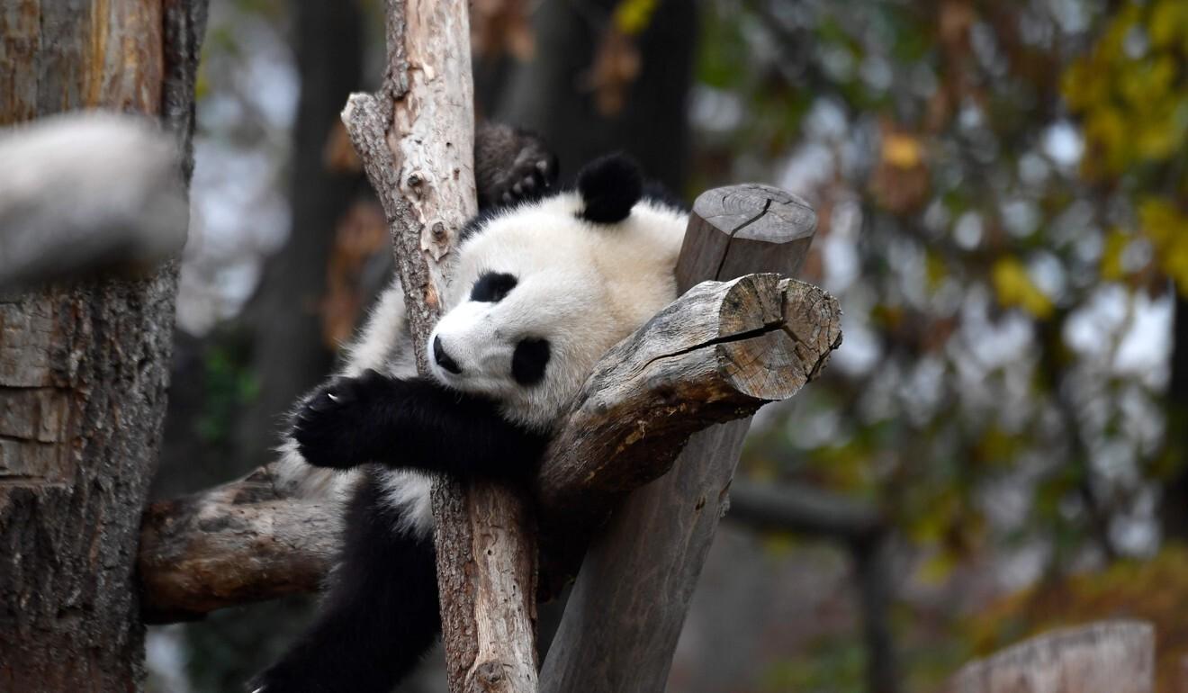 Coronavirus Lockdown Leaves Europe S Zoos On Brink Of Financial Ruin South China Morning Post
