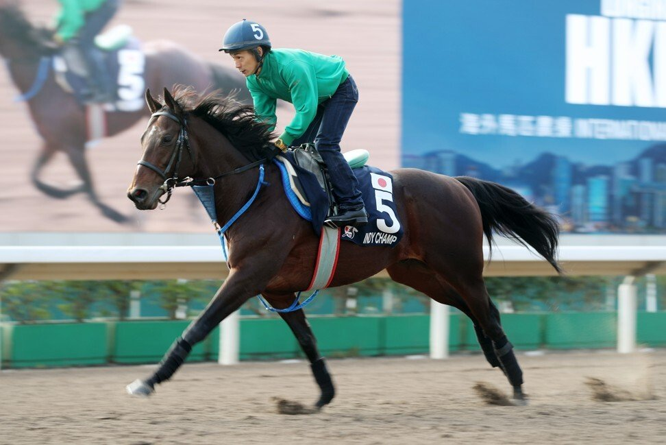 Indy Champ works at Sha Tin in the build-up to last year's Hong Kong International Races.