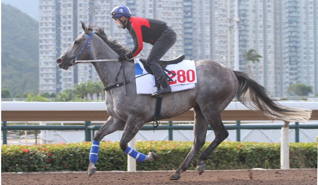 Classique Legend works at Sha Tin recently.