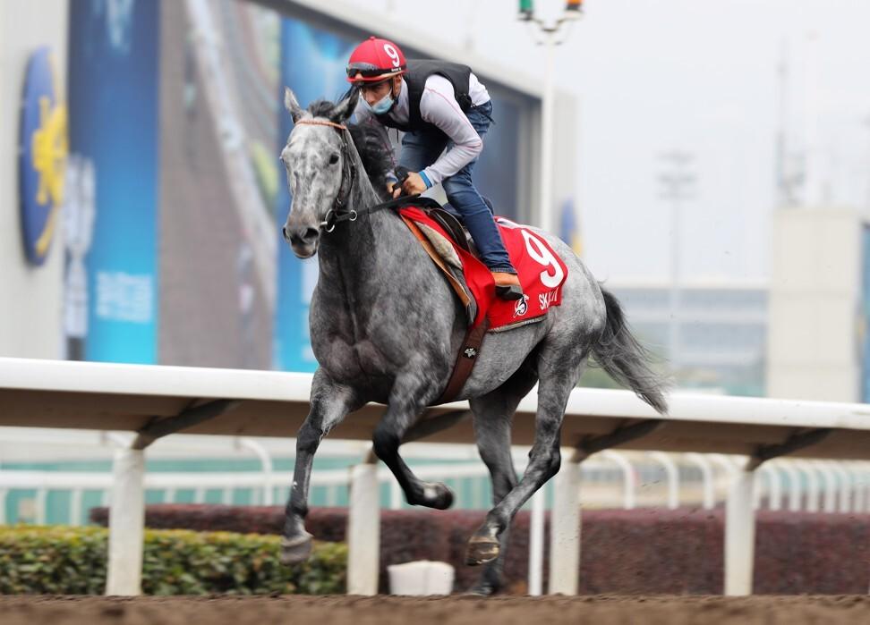 Skalleti gallops at Sha Tin this week. Photo: Kenneth Chan