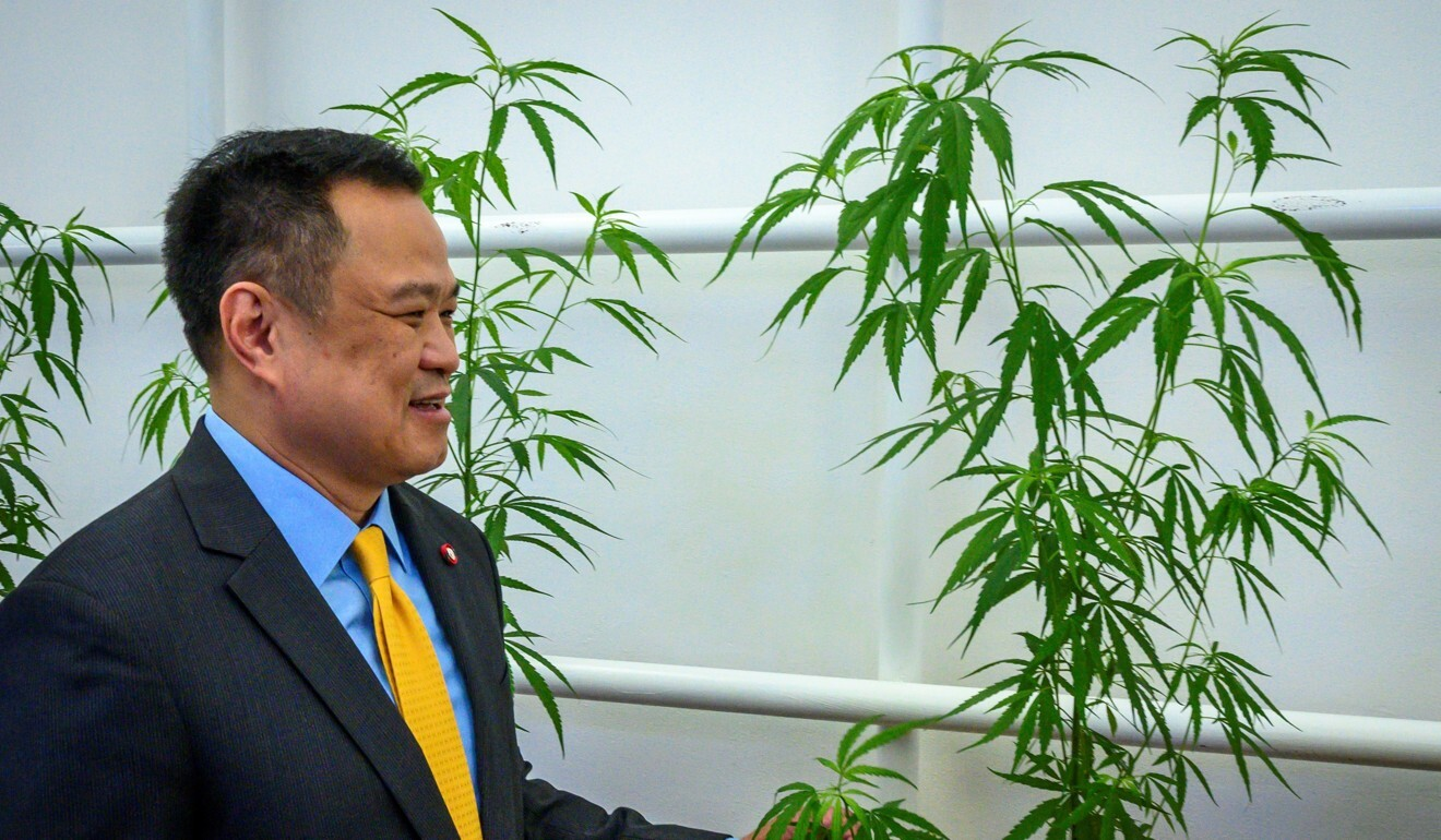 Thailand's Deputy Prime Minister and Minister of Public Health Anutin Charnvirakul touches a cannabis plant during the opening of a cannabis clinic in Bangkok. Photo: AFP