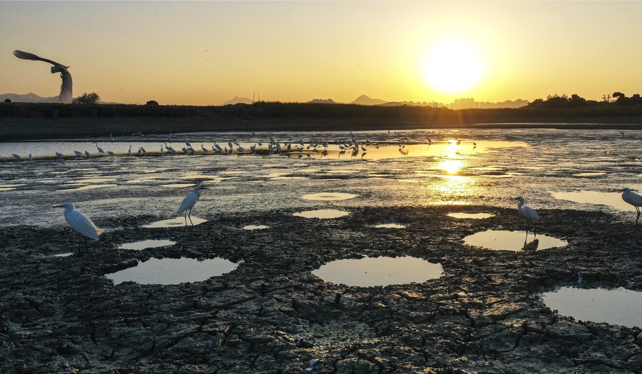 Migratory birds stop off at Tai Sang Wai, near Mai Po nature reserve. Photo: Winson Wong