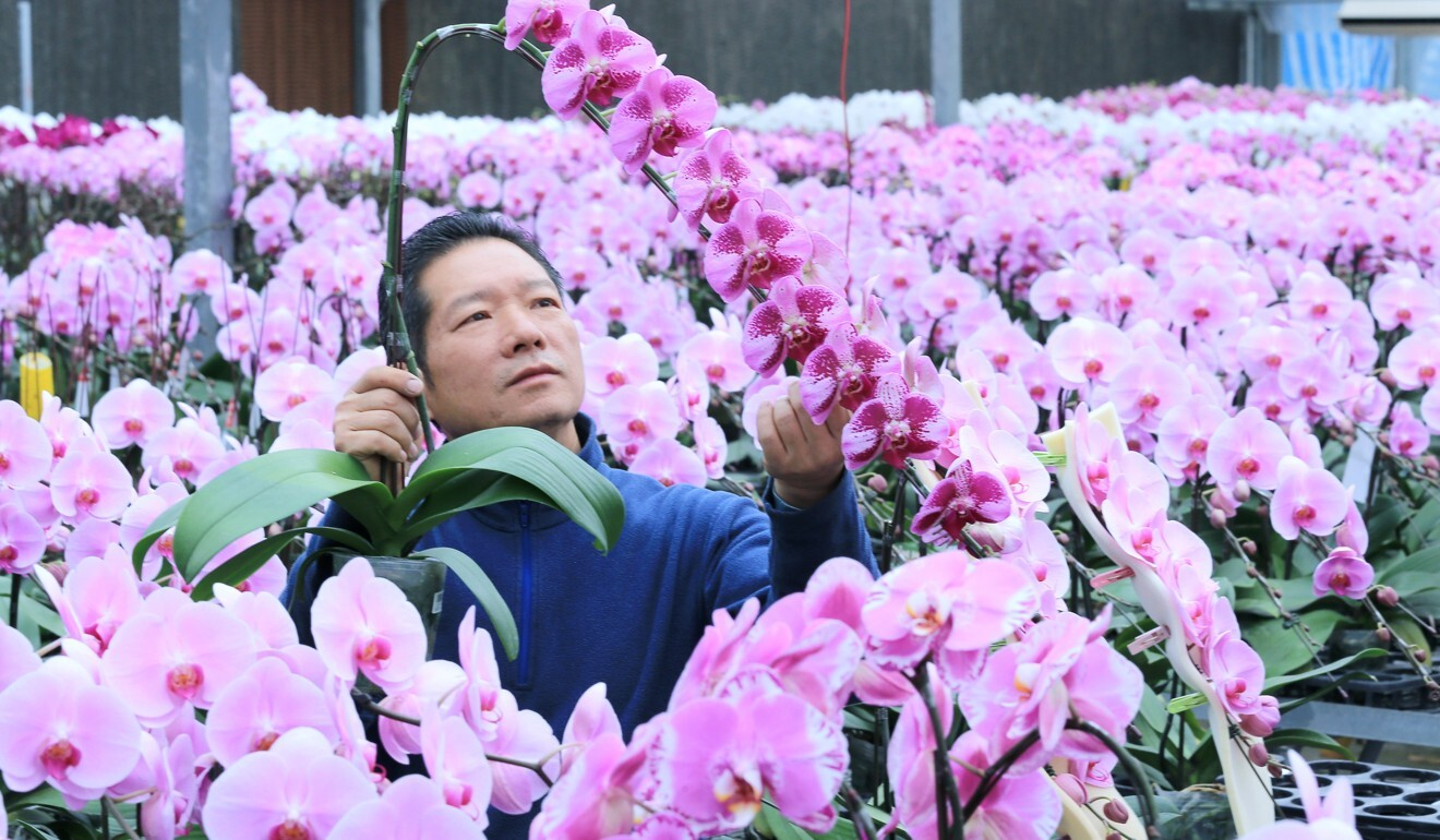 Orchid farmer Yeung Siu-lung. Photo: Dickson Lee