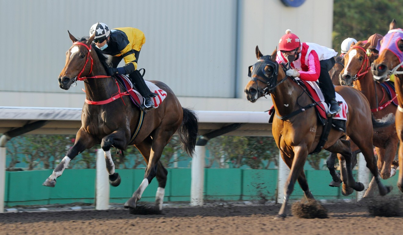 Congratulation (right) trials at Sha Tin ahead of his debut on Sunday.