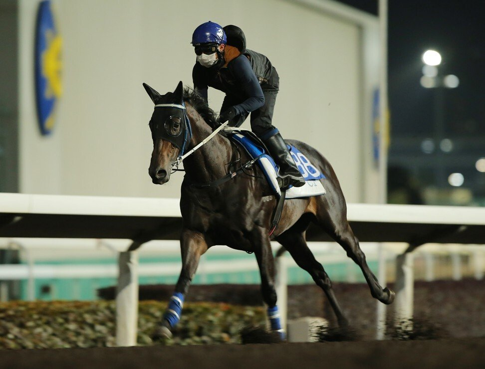 Sky Darci works at Sha Tin ahead of the Classic Cup.
