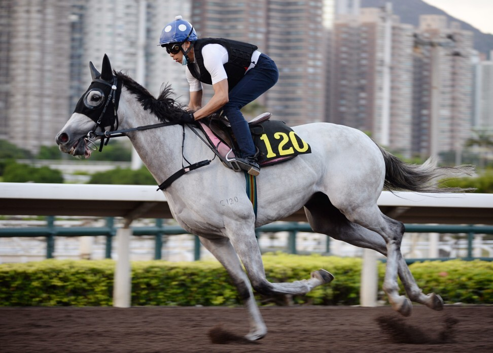 Vincent Ho gallops Glorious Dragon on Friday morning.