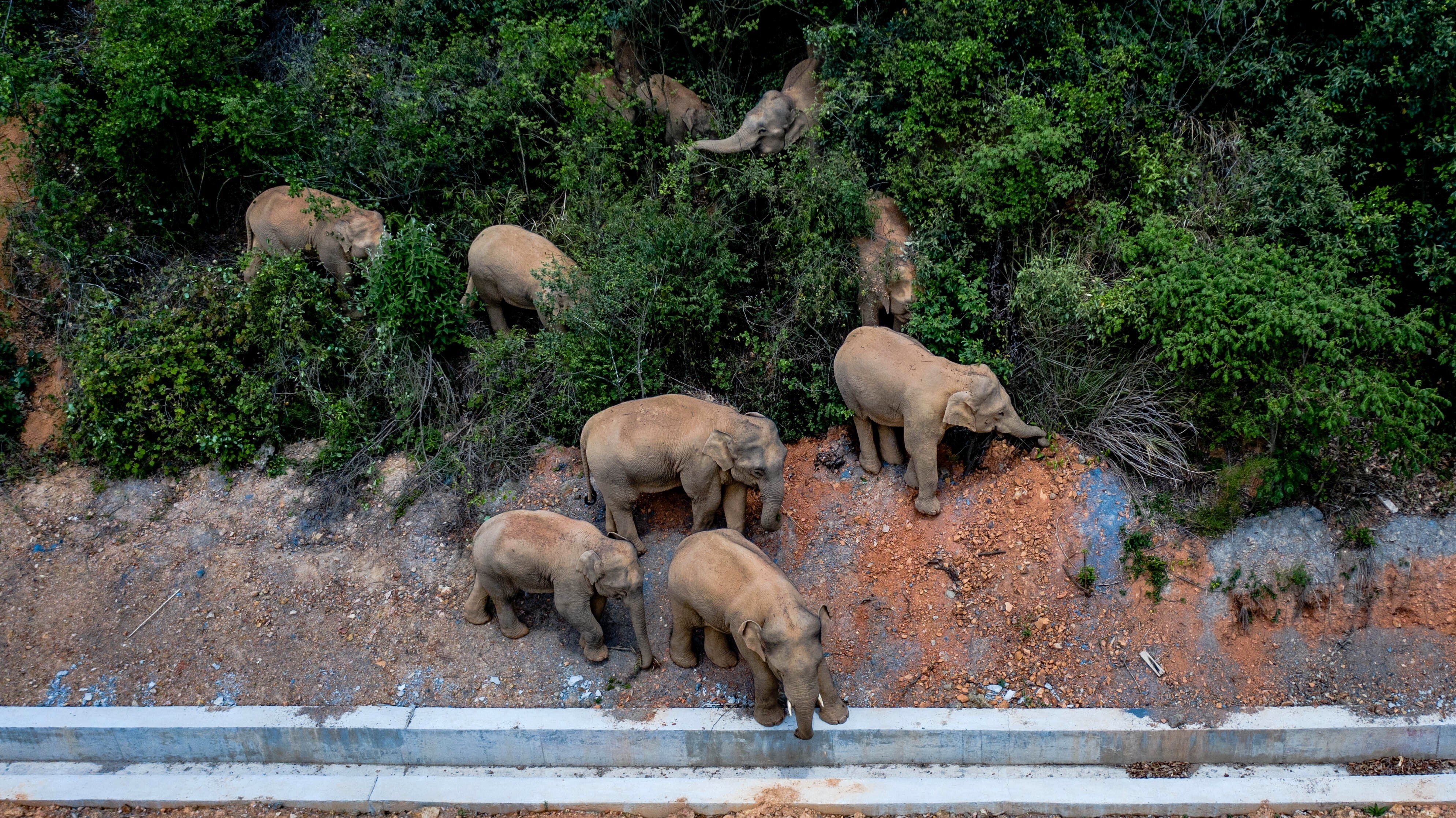Chinese elephant herd hits the road on quest through urban jungle | South  China Morning Post