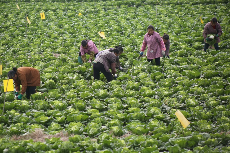 China is keen to harness cutting-edge biotechnology to meet its food security goals. Photos: Reuters