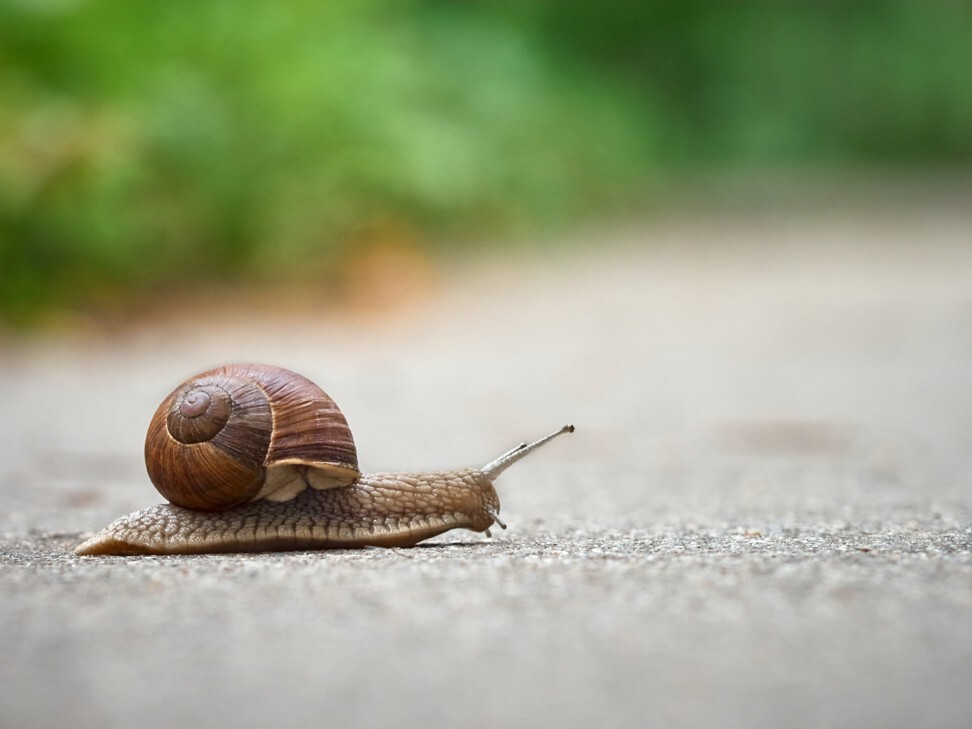 The accused reportedly told witnesses it was necessary to remove snails. Photo: Shutterstock